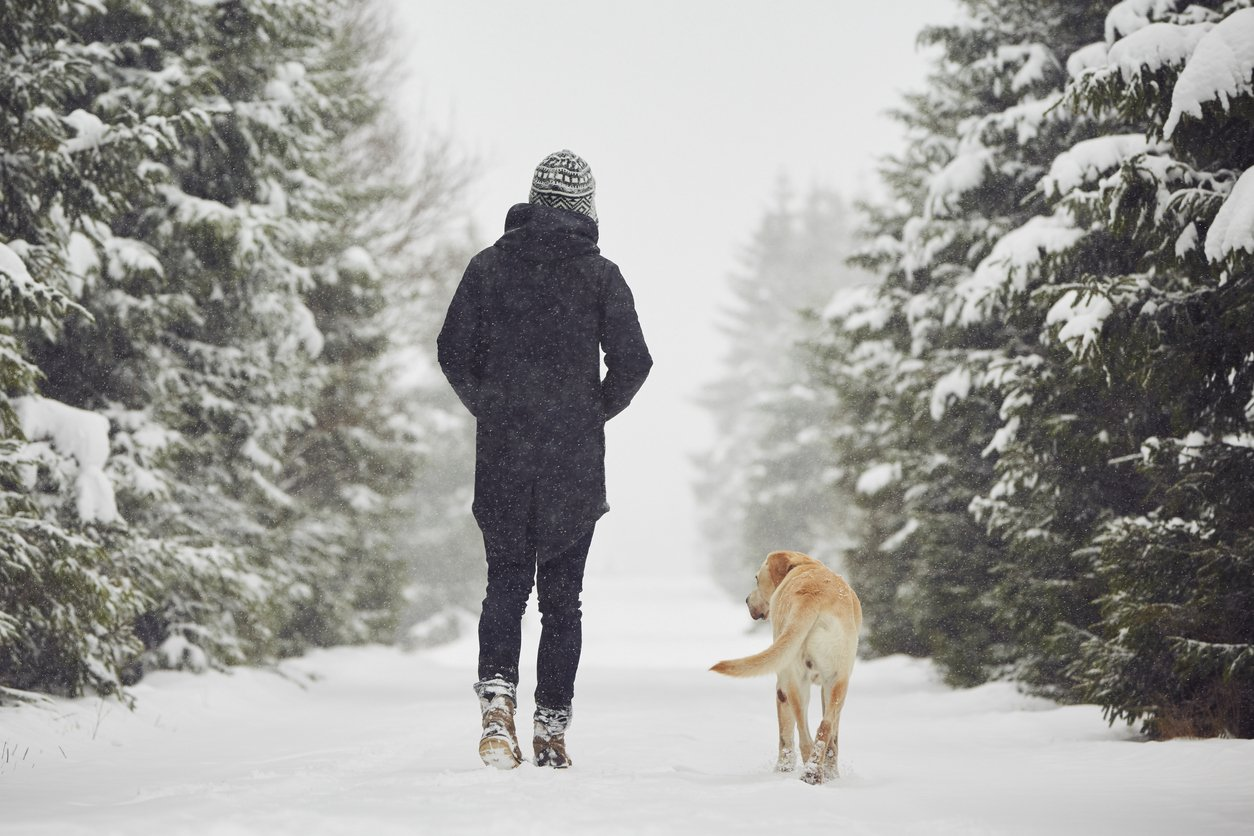 person walking in snow with their dog